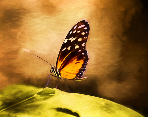 Monarch-Butterfly-Steven-Michael-Photography-and-Art